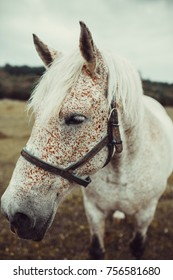 White horse with freckles walking on the pasture