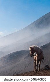 A White Horse in front of mountains near sulfur Volcano Bromo