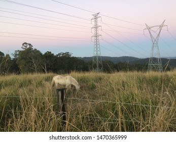 """white horse in grass field with """"cotton candy"""" sunset and powerlines in Mount Tambourine, Australia"""