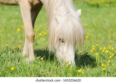 white horse grazing on pasture