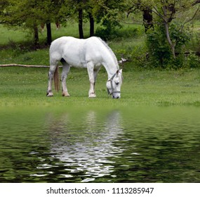 white horse in green park near water