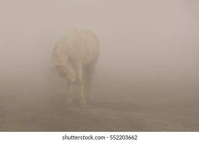 A white horse in a horizontal presentation in the fog.