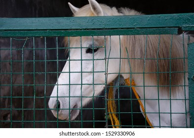 A white horse inside the cage