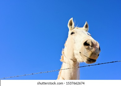 The white horse inside the fence under the blue sky