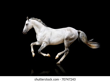 white horse isolated