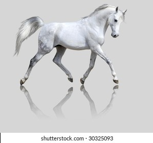 white horse isolated on the gray backgroung