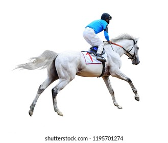 white horse jockey horse racing isolated on white background