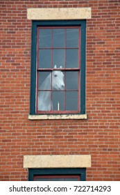 White horse mannequin in the window of the old red brick building