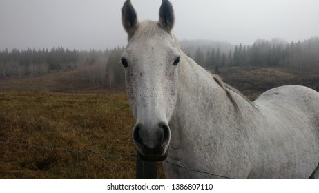 A white horse near a film set in the early morning fog.