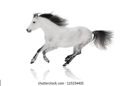 white horse on white isolated