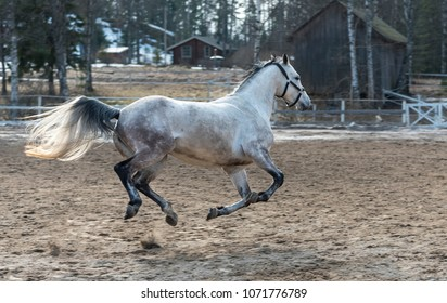 White horse on ranch
