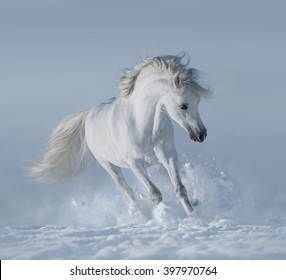 White horse on snowfield