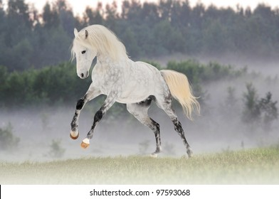white horse play in morning