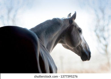 White horse portrait
