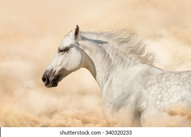 White horse portrait in art backgrounds