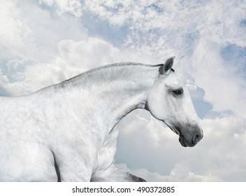 White Horse portrait run on sky background