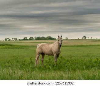 White Horse Poses for Photo on Cloudy Day