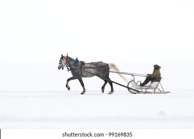White horse pulling sleigh