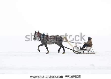 white horse pulling sleigh stock photo edit now 99169835