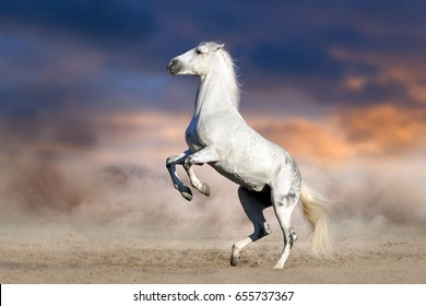 White horse rearing up against dark sunset background