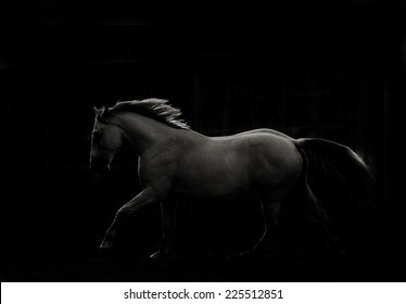 white horse run in dark