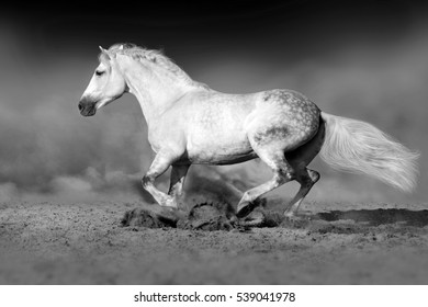 White horse run gallop in desert. Black and white