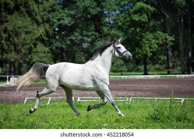 white horse running on a field