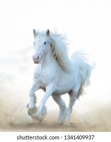 white horse running in prairies