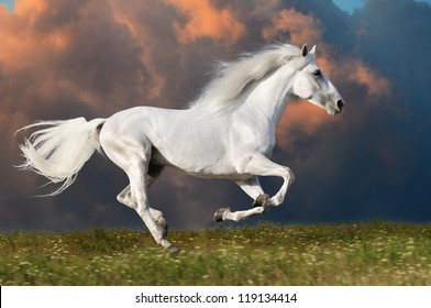 White horse runs gallop on the dark sky background