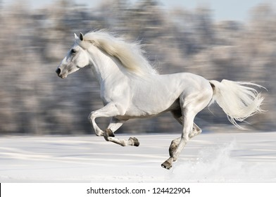 White horse runs gallop in winter, motion blur