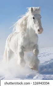 White horse runs gallop in winter on sky background