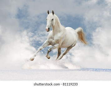 white horse in the sky