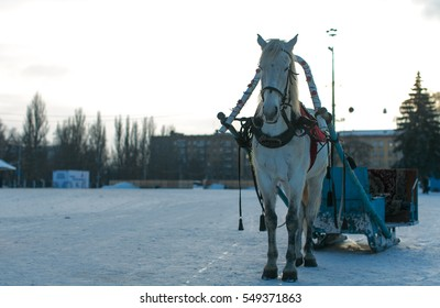 White horse with sleigh on white ground because of snow and white cloudless sky. Horse on city square.