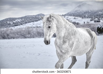 White Horse in snow with mountain in background
