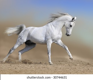 white horse stallion run gallop in dust desert, collage paint