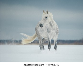 white horse standing in the snow
