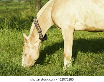 A white horse stands on green grass
