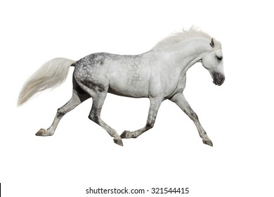 White horse trotting on white background