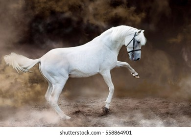 White horse waving his front foot in a fog