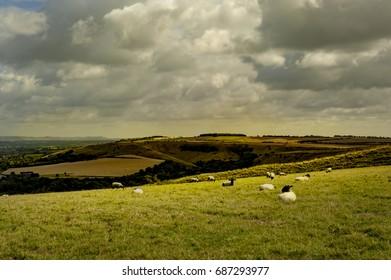 White horse- Wiltshire UK