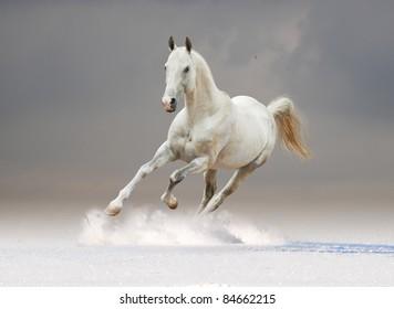 white horse in winter desert