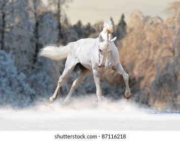 white horse with winter forest behind