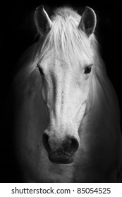 White Horse Head Images Stock Photos Vectors Shutterstock