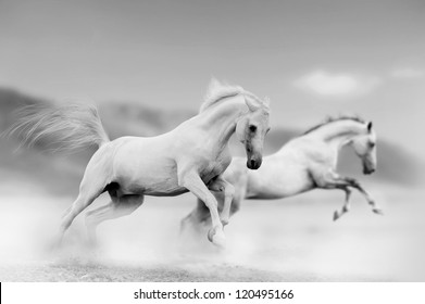 white horses in desert