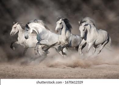 White horses free run in desert
