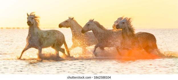 White horses running through water - background banner image