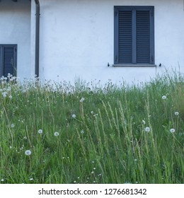 a white house with shuttered windows and white dandelions