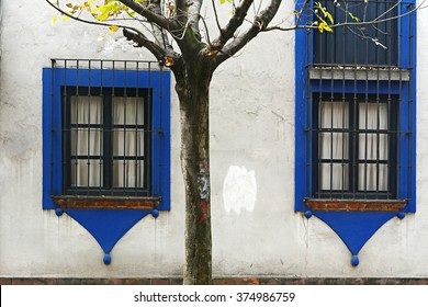 A white house and tree in the Coyoacan neighborhood in Mexico City.