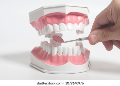 White human teeth model and dental mirror instruments with doctor's hand on white background.