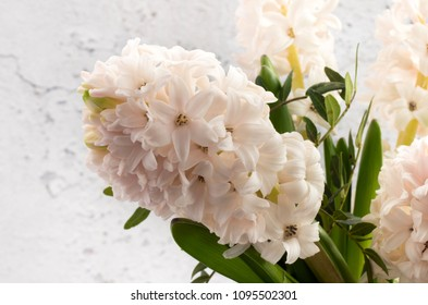 White Hyacinth with aged plaster effect background.